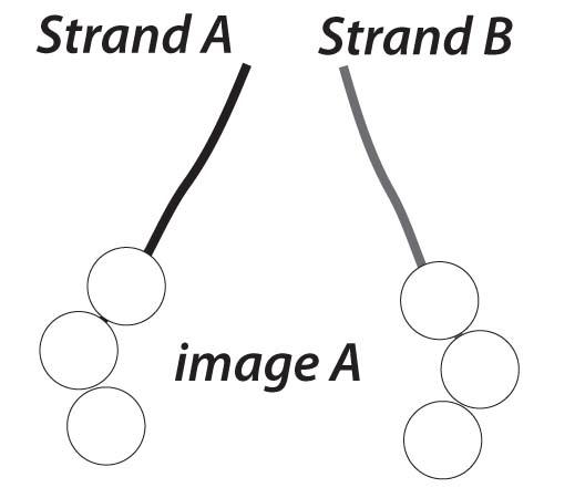 step 1 knot elastic